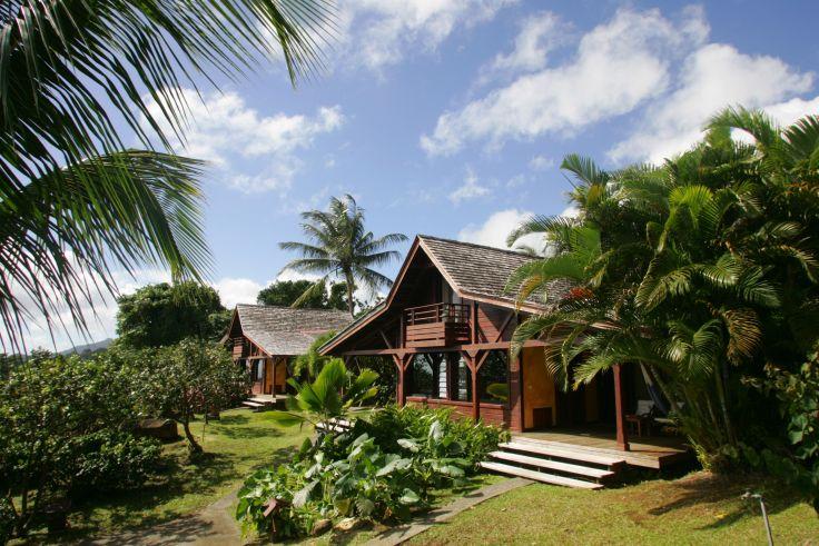 Jardin Malanga - Trois Rivières - Guadeloupe