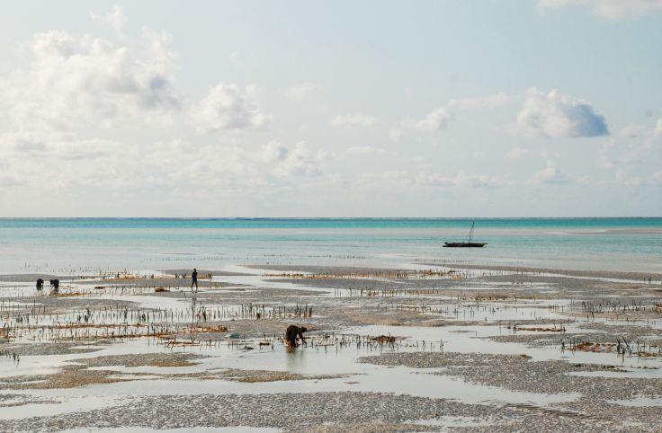 Sur une plage de Zanzibar - Tanzanie